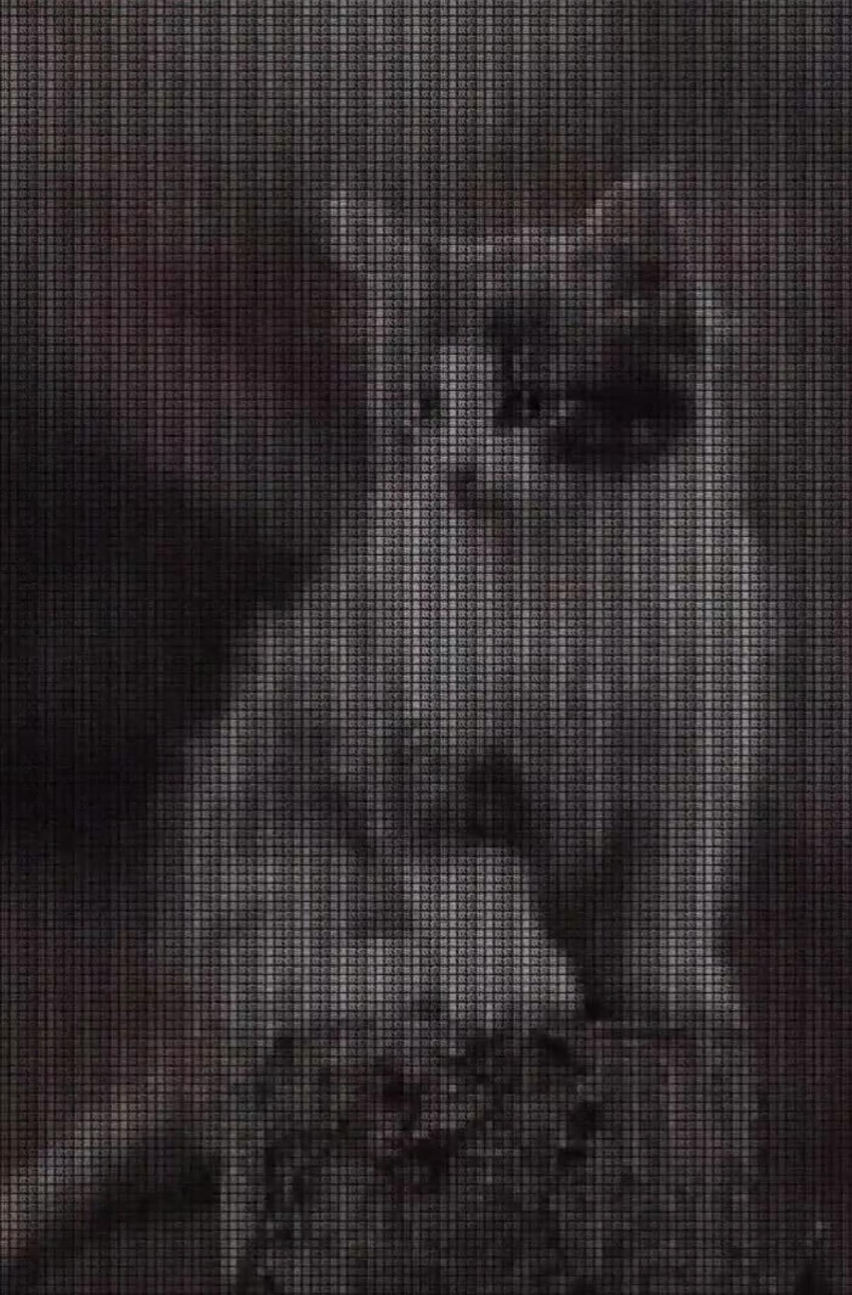 抖音我喜欢你猫咪图片分享