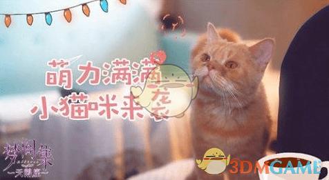 《梦间集:天鹅座》吸引猫猫攻略
