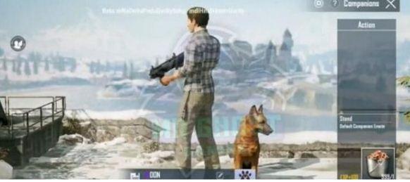 《和平精英》宠物狗获得方法介绍